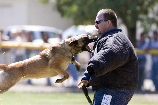 PPD_K-9_Trials_Aug_19_2006_509_1