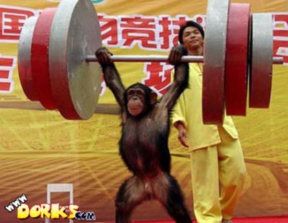 Monkey-Weightlifting