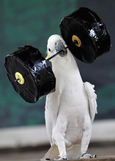 Bird%20Barbell