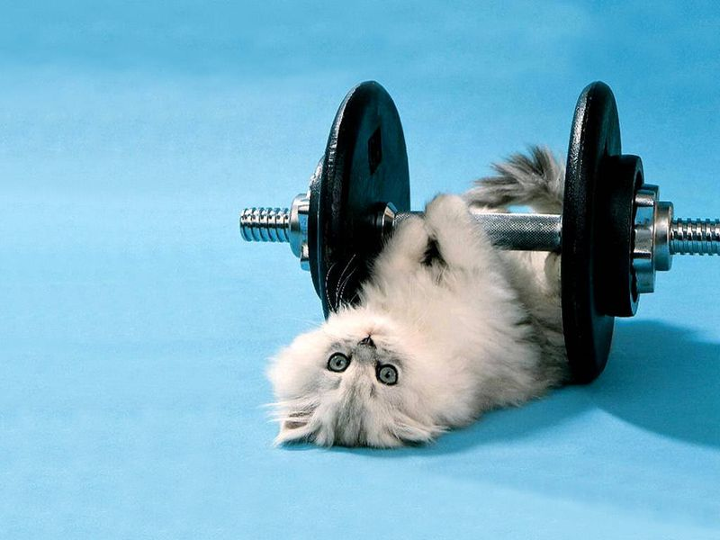 Funny_Kitten_Lifting_Weights